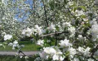 Уход за яблонями весной борьба с вредителями