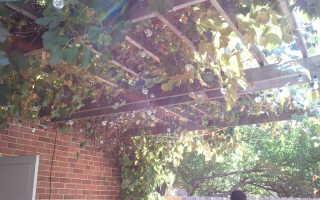 Что такое пресс для винограда