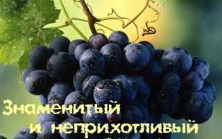Зариф черная жемчужина среди винограда