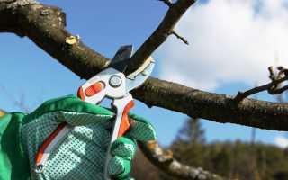 Когда можно обрезать плодовые деревья осенью