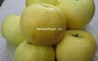 Яблоня брянское золотистое описание сорта