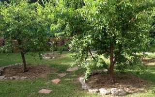 Популярные сорта яблонь в подмосковье