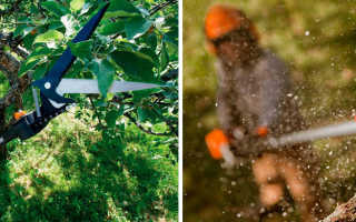 Сучкорезы для обрезки деревьев бензиновые