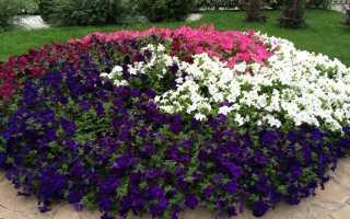 Какие цветы похожи на петунию