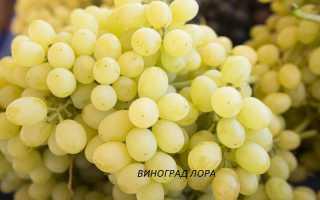 Виноград поздние столовые сорта фото 18 сортов и описание