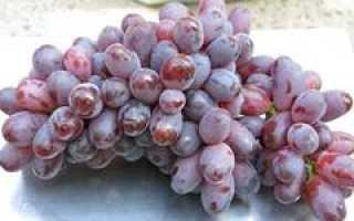 Загадочный сорт винограда шахиня ирана