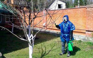 Причины поражения деревьев