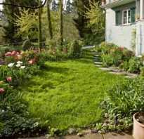 Работы в саду в мае любимые цветы
