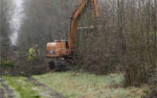 Как очистить участок от деревьев и кустарников