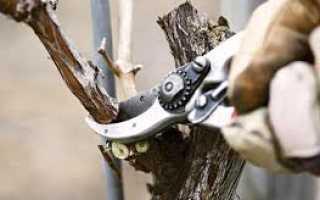 С какой целью обрезают виноград