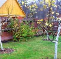 Подготовка яблонь к зиме на урале