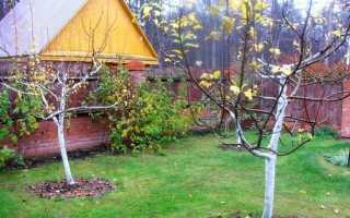 Подготовка молодых яблонь к зиме