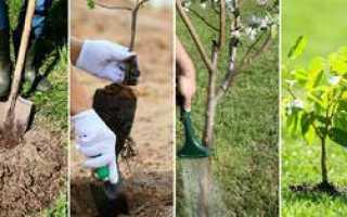 Как сажать дерево