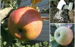 Сладкая яблоня медуница