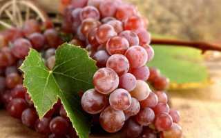 Общие сведенья о красном винограде