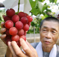 Американская группа винограда