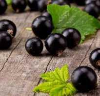 В чем особенность черной смородины