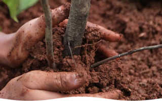 Посадка плодовых деревьев осенью сроки