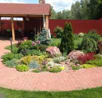 Цветы и растения для рокария