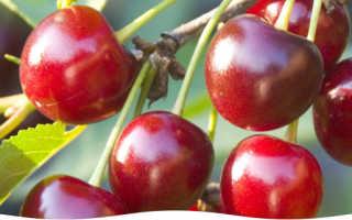 Заболевания вишневых деревьев