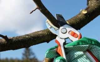 Сроки обрезки фруктовых деревьев