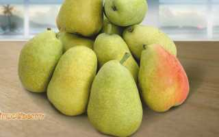 Польза и вред груши для организма калорийность