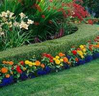 Цветы для посадки на даче многолетние