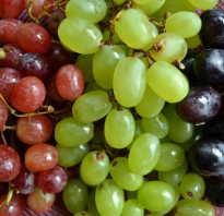Аллергические реакции на всем любимый виноград