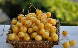 Лучшие сорта желтой черешни