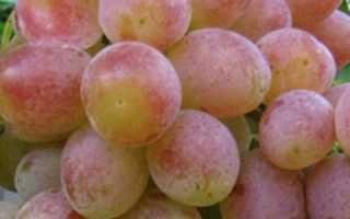 Особенности винограда памяти хирурга