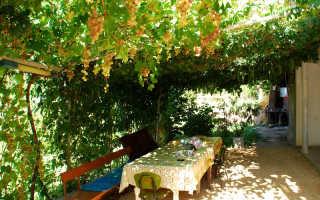 Беседка под виноград своими руками особенности конструкции наша беседка