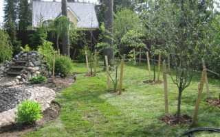 Когда лучше сажать деревья осенью или весной
