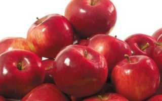 Описание и разновидности яблони сорта анис посадка и уход