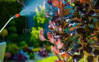 Обработка винограда медным купоросом весной