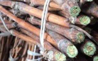 Хранение черенков винограда зимой справочник дачника