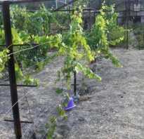 Делаем шпалеру для девичьего винограда самостоятельно