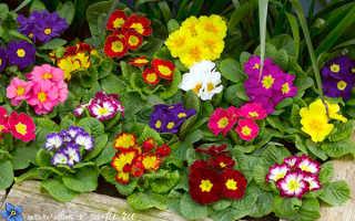 Тенелюбивые цветы для посадки на участке