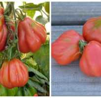 Выгоды грушевидных томатов