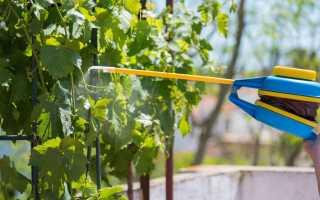 Значение железного купороса для винограда осенью