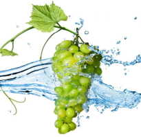 Белый виноград и его полезные свойства