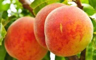 Персик биг хани характеристика сорта