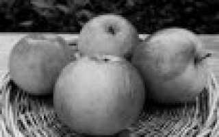 Зимние сорта яблонь для среднего поволжья зимостойкие