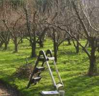 Как обрезать плодовые деревья осенью схема