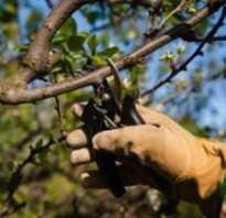 Как должна производиться обрезка яблонь весной рекомендации профессионалов