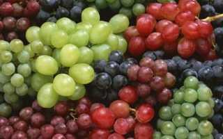О кустах винограда