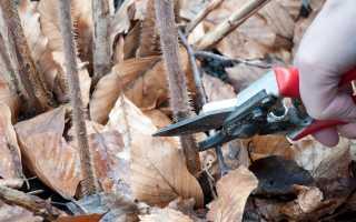 Когда подрезать малину осенью или весной