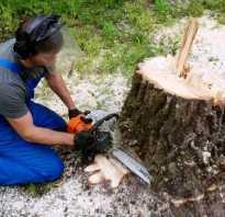 Как выкорчевать деревья на участке своими руками