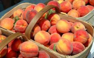 Какой сорт персика лучше посадить