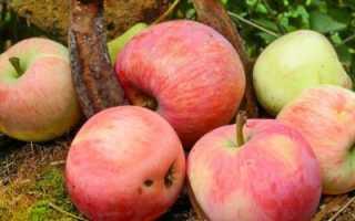 Какой сорт яблок самый сладкий