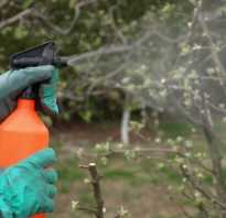 Обработка яблонь железным купоросом осенью